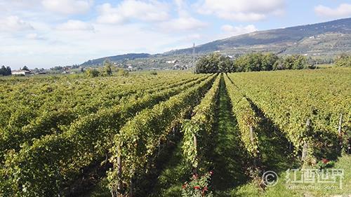 记忆中的格鲁吉亚葡萄酒