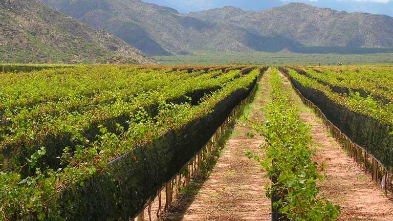 盘点那些名称相似的葡萄酒产区