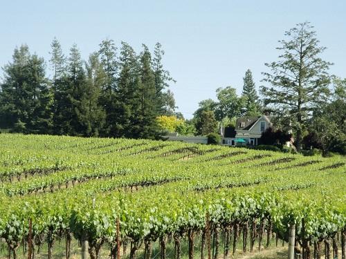 这些加州知名葡萄园,你认识几个?