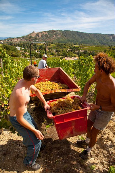 跨越千年的酒香:罗纳河谷葡萄园概况
