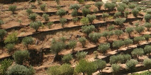 秉承傳統與不懈創新的葡萄牙葡萄酒