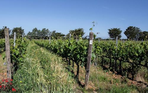 佳亚·嘉雅:巴巴莱斯科葡萄酒的新发展