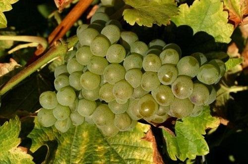 美国葡萄酒朝圣地——加州