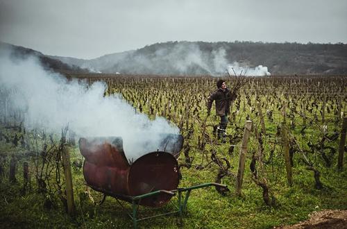 勃艮第新一代女酿酒师