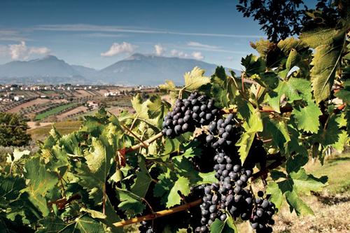 阿布鲁佐,被低估的意大利产区