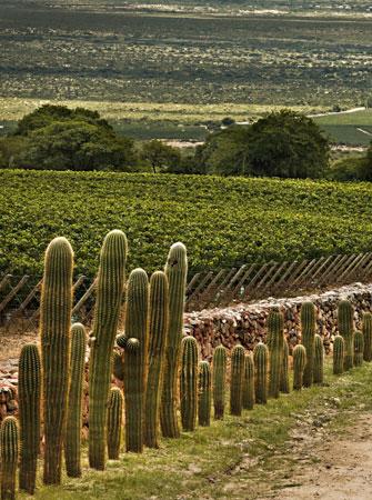 阿根廷两大非主流葡萄酒产区介绍