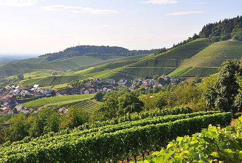 了解德国葡萄酒,从13个产区开始