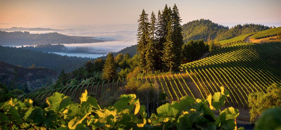 波尔多VS加州赤霞珠葡萄酒全比较