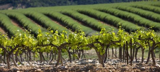 十问十答,罗纳河谷的葡萄酒不再复杂
