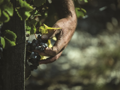 生物動力法葡萄酒基礎七問