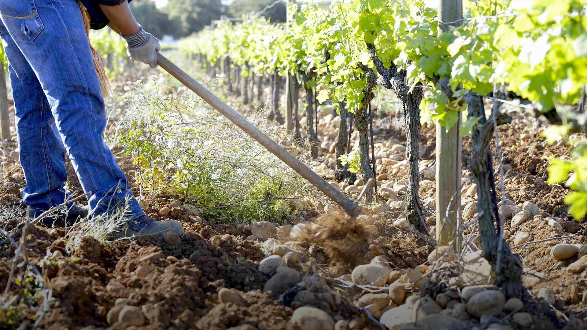 了解葡萄酒,不可不知的土壤类型