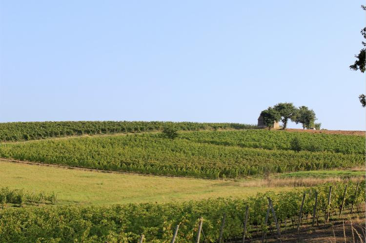 安茹,卢瓦尔河古老而浪漫的产酒区