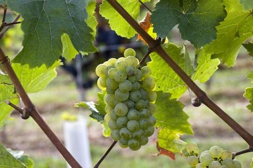 十大最匪夷所思的葡萄酒风味,你品得出吗?