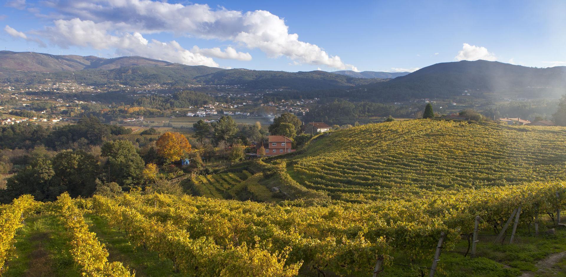 在顶级西班牙葡萄酒盛大品鉴会上,窥见多元的美好