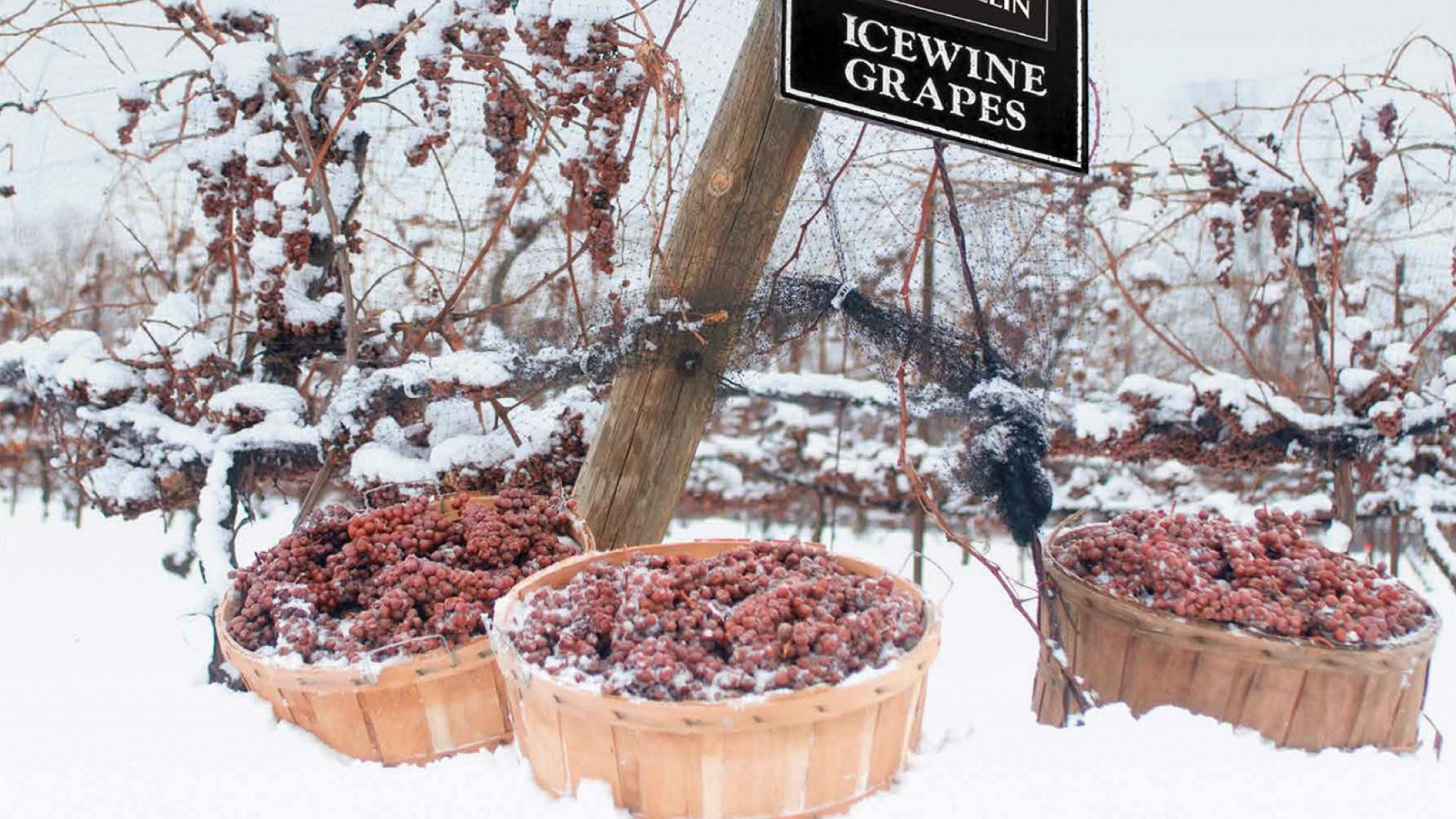安大略,冰雪天地里的美酒之乡