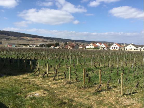 勃艮第3,000公顷葡萄园受灾,生产商联合向政府求助