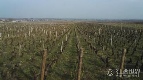 勃艮第那些非常優秀的平價葡萄酒