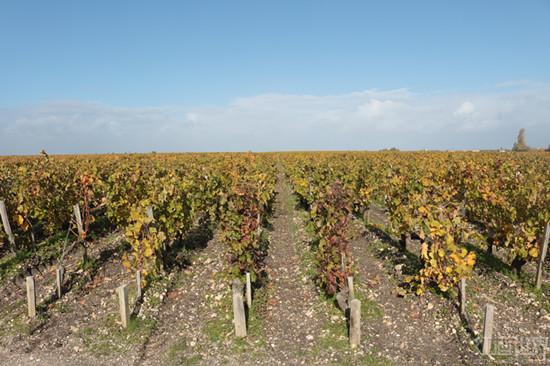 加州葡萄开始迎来第一次丰收