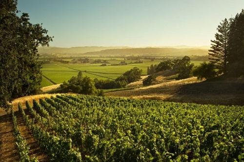 4组数据,让你更了解加州葡萄酒