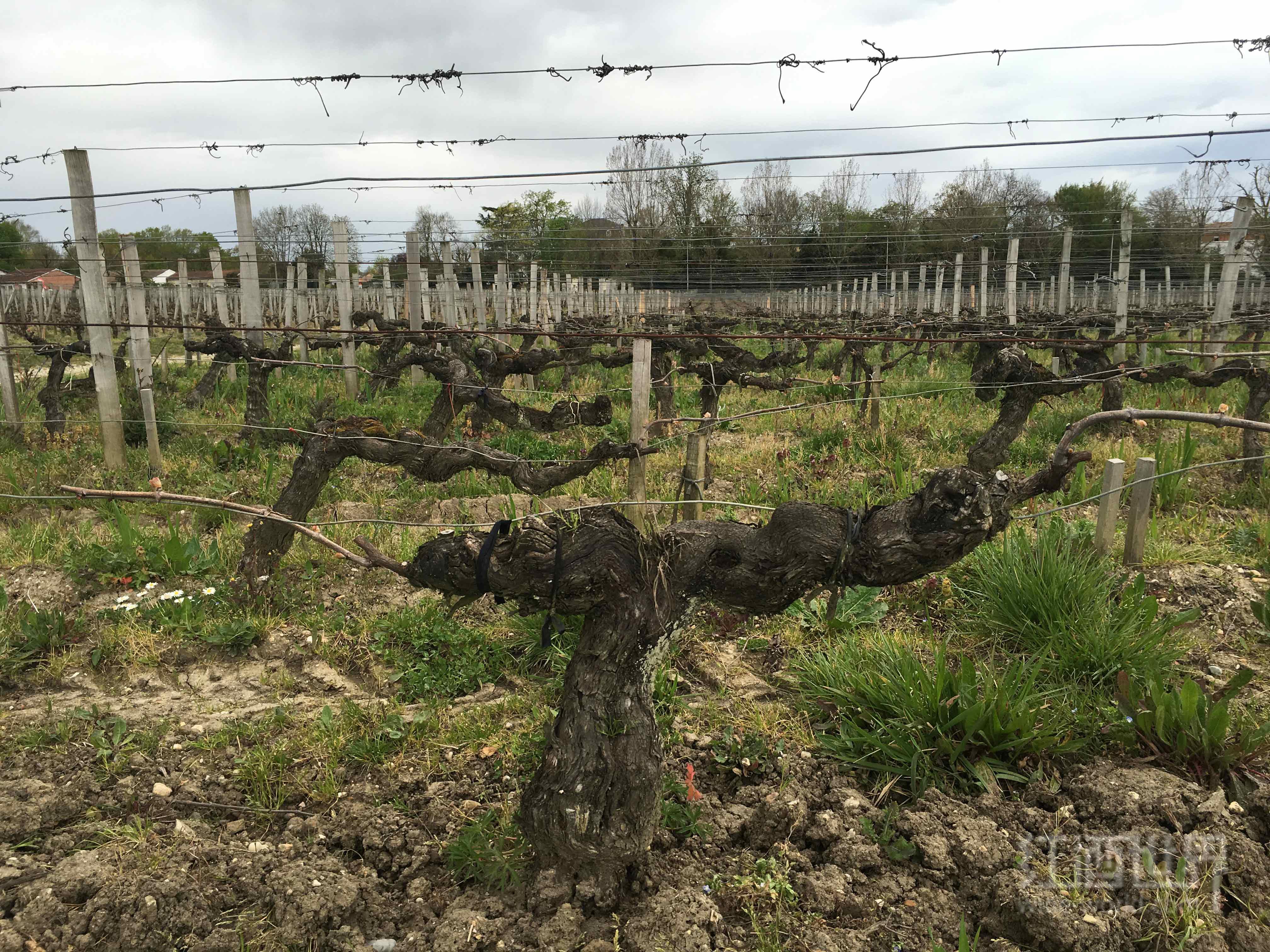 漫谈葡萄栽培架式