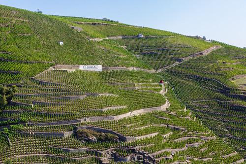 罗第丘:出产众多RP满分西拉佳酿的传奇小产区