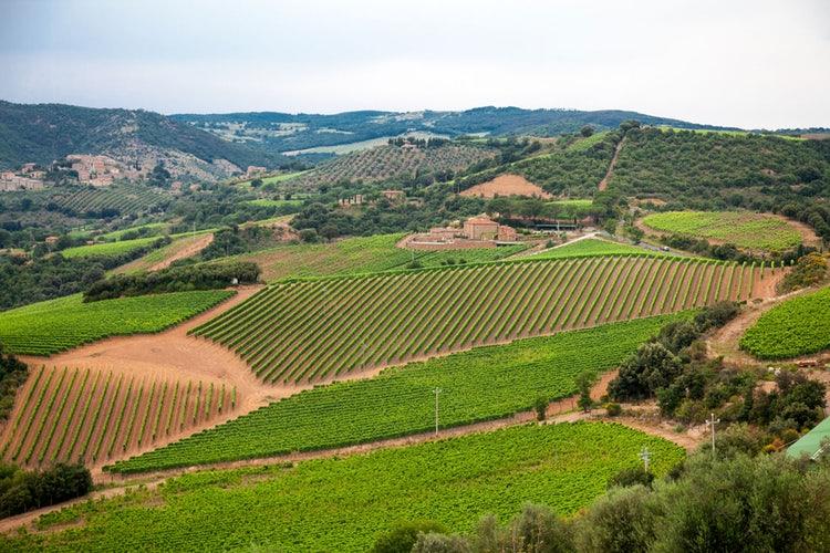 经典基安帝委员会成立首个葡萄酒教育中心