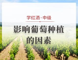 影响葡萄种植的因素
