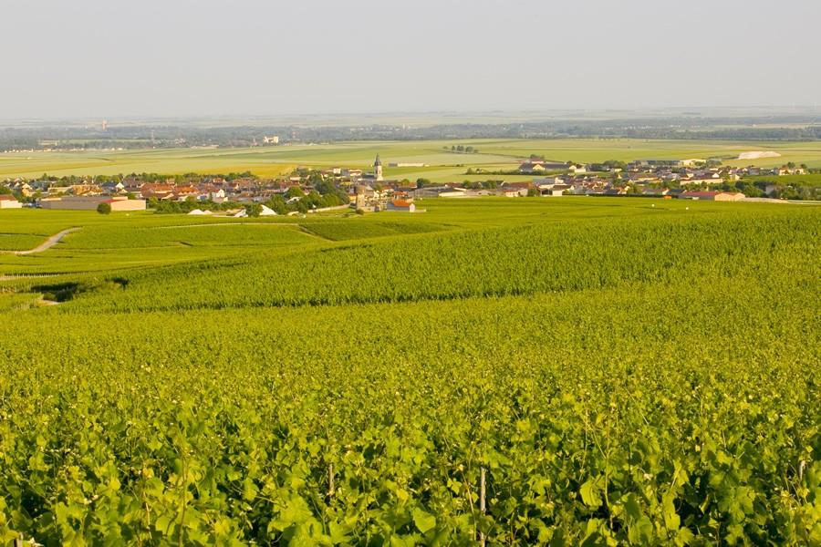 香槟山丘:香槟产区也产静止葡萄酒