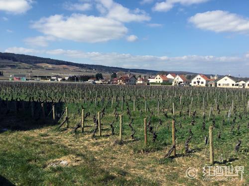 法国原产地众多,它们背后绑定的葡萄品种是什么?