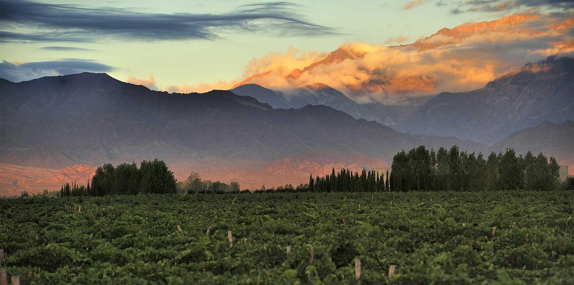 高海拔葡萄园究竟有什么特别之处?