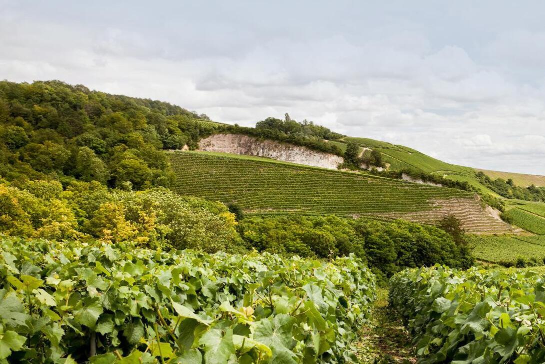 伯瑞香槟将酿造英国起泡酒