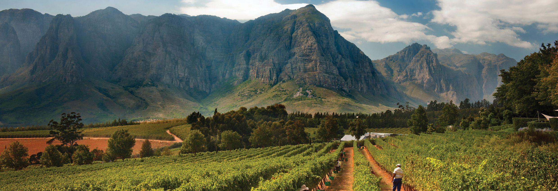 2016南半球葡萄收成报告:南非