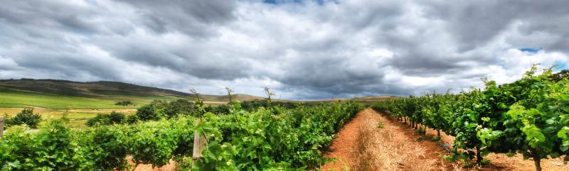 东欧诸国葡萄酒之旅