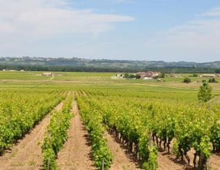 海拔、纬度、土壤......影响葡萄种植的自然因素有哪些?
