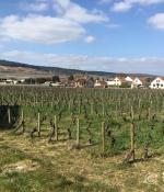 影響勃艮第葡萄酒歷史的幾大關鍵人物