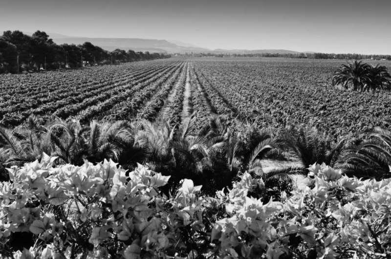 撒丁岛葡萄酒品尝指南