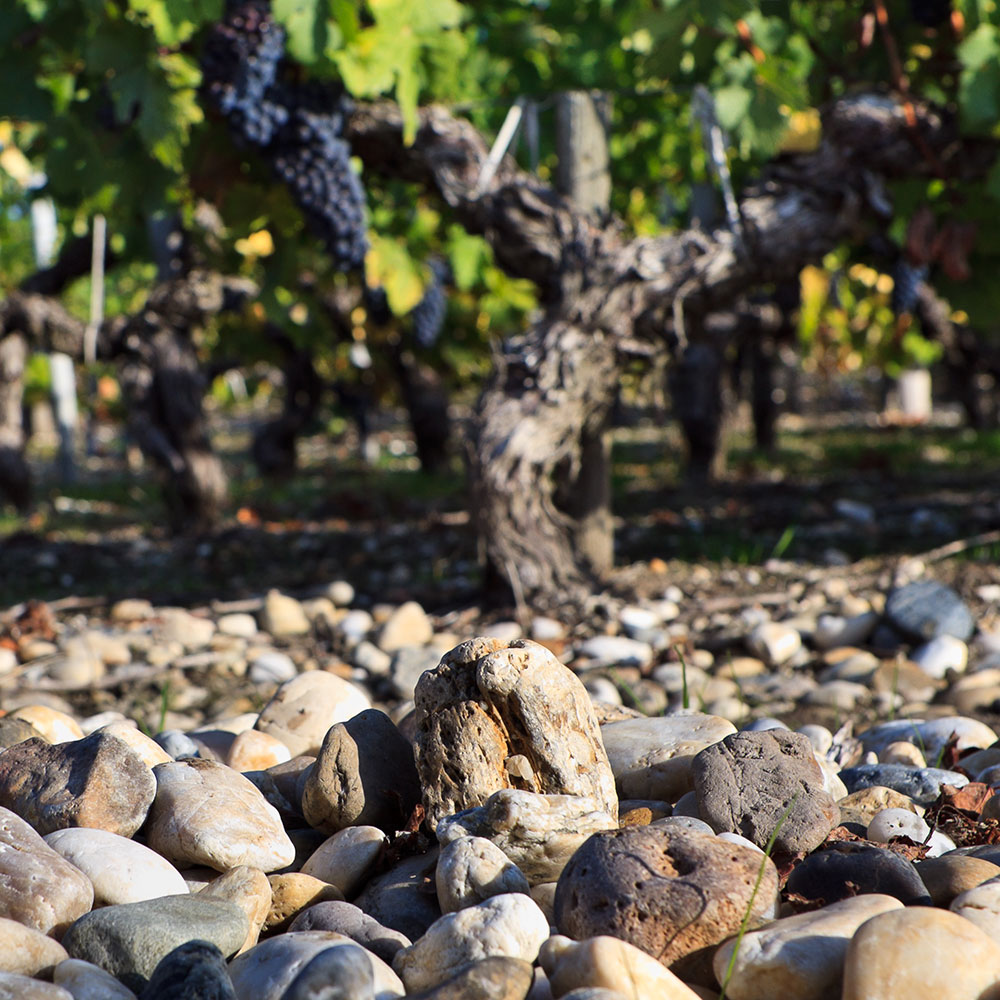 葡萄酒产区常见土壤类型盘点