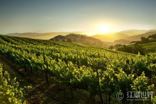 2014年最值得旅游的10大葡萄酒胜地