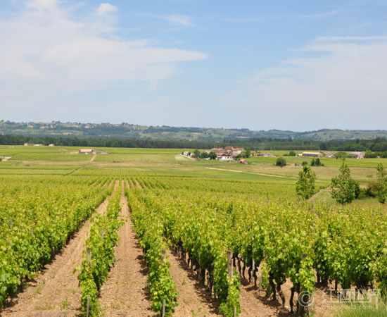德国葡萄栽培史