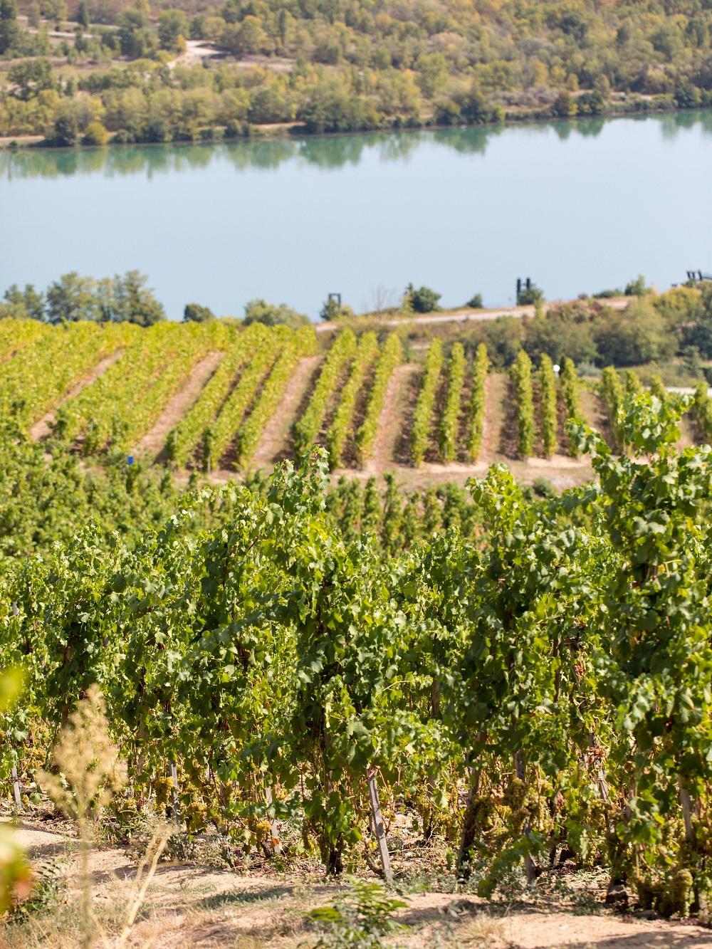 盘点21世纪罗纳河谷葡萄园的优秀年份
