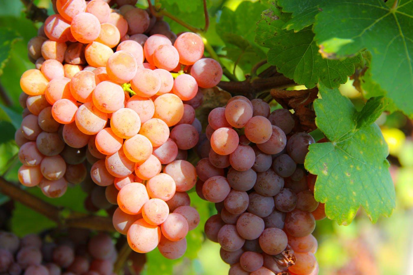 细数葡萄酒中常见的香料风味