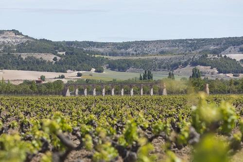西班牙葡萄品种之王——丹魄