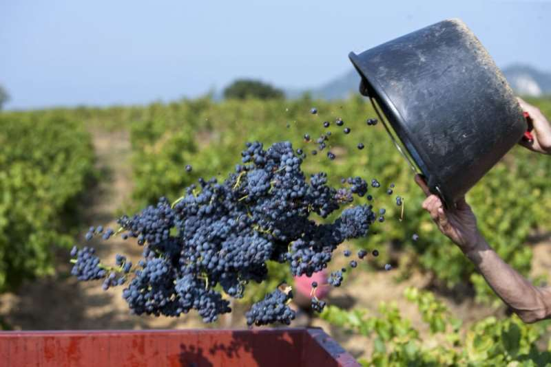 荷兰合作银行:2017年葡萄减收致桶装酒价格攀升