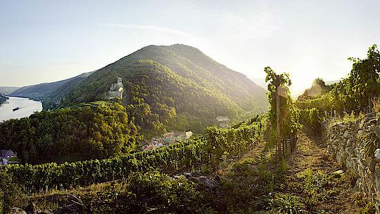 奥地利葡萄酒的复兴