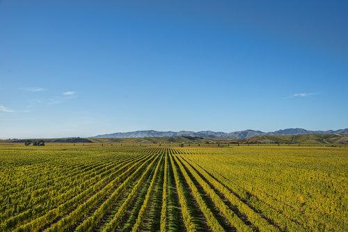 新西兰欢庆长相思葡萄酒节