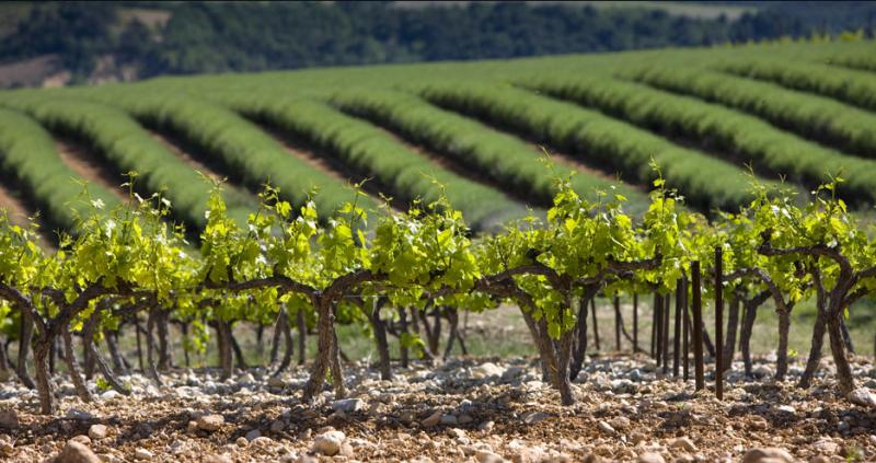 提到法国葡萄酒,可别只知道波尔多