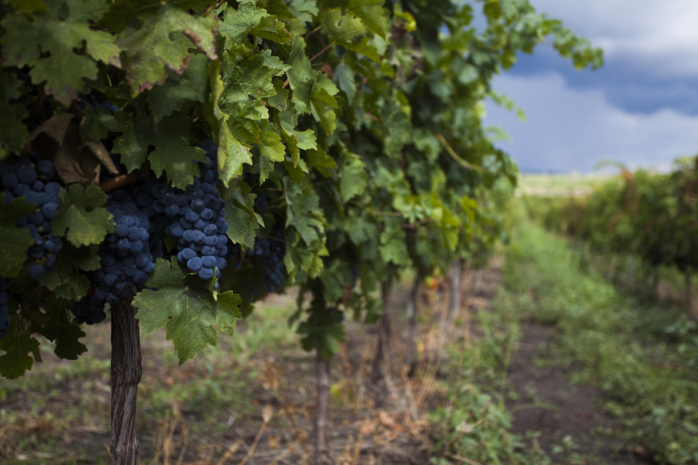 8个知识点助你了解罗马尼亚葡萄酒