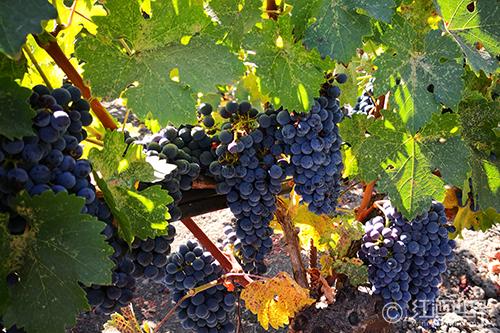 淺談葡萄酒的保存期限