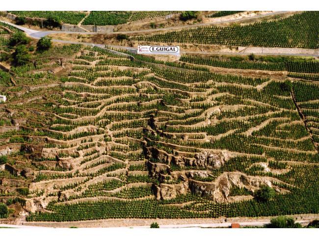 罗第丘的红葡萄酒为何要加白葡萄?