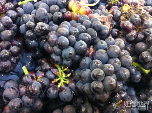 史上最全红葡萄酒酿造过程(附高清实景图)